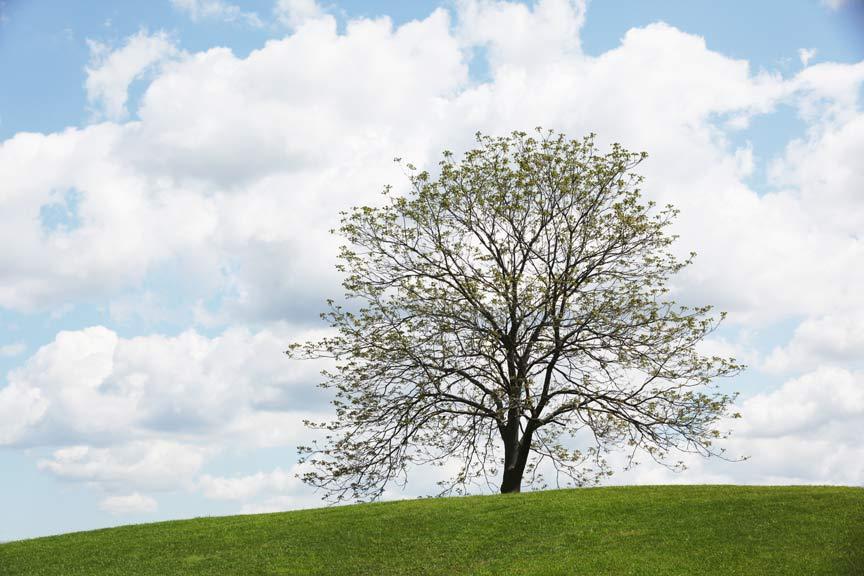 lone tree hispanic single men Location: lone tree, co phone: 303-625-9935 fax: 303-625-6139 e-mail: ltgl@cabelascom view all guns from lone tree, co.